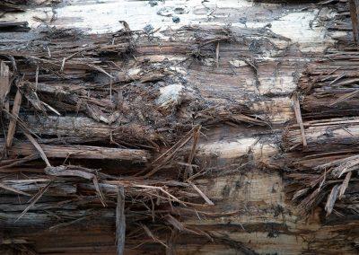 Detail of legacy canoe log